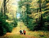 photo of a hiking trail at Cooks Forest PA State Park