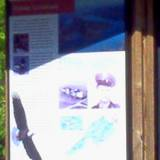 photo of a poster displayed at Bald Eagle State Park explaining its history