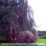Mount Assisi garden