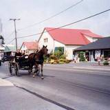 image of Amish women with horse and cart at stop sign