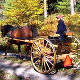 photo of a person riding a horse drawn cart at Cooks Forest PA State Park
