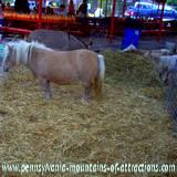 DelGrosso Parks Harvestfest Petting Zoo