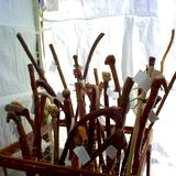 Boalsburg's The People Choice Festival crafts tent selling walking sticks