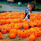 beautiful pumpkin patch with scarecrow in the center