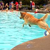 photo of dog jumping into the swimming pool on dog days at Sandcastle Water Park