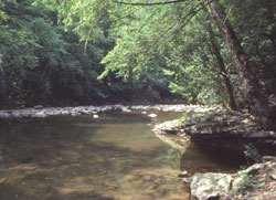 PA State Park Trough Creek